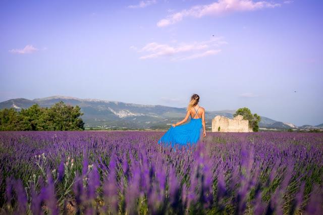 cánh đồng hoa oải hương đẹp nhất thế giới 28