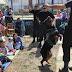Párvulos de los Jardines de Verano disfrutaron de una muestra de perros policiales