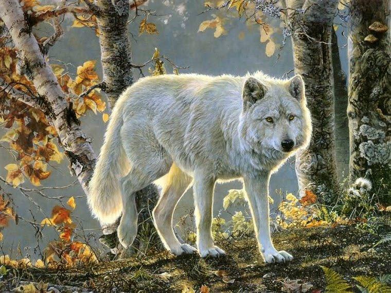 Criações Divinas Lobos Bonitos E Ferozes