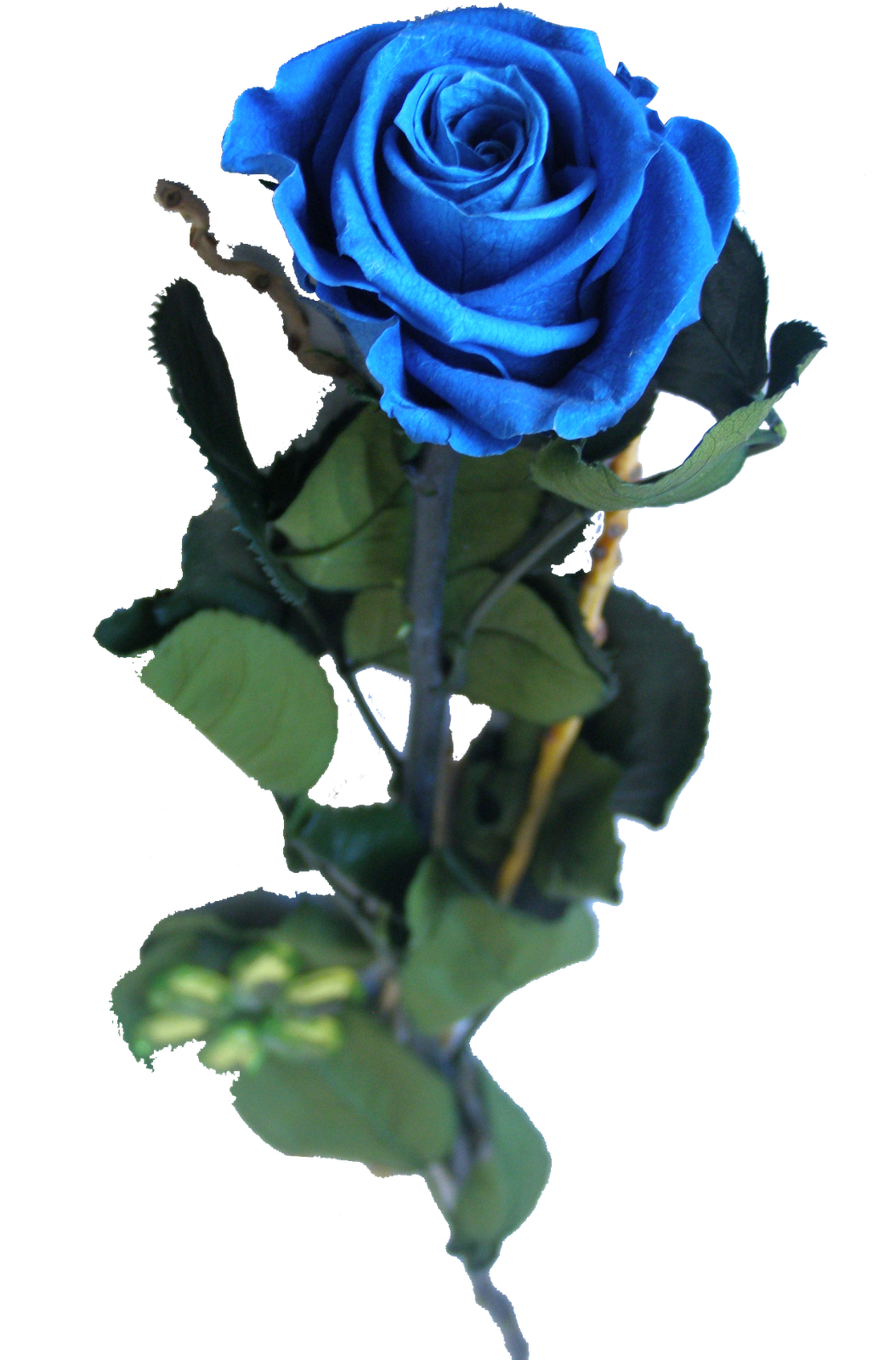 Pz C Puertas Exterior: PZ C: Rosa Azul
