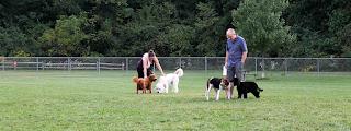 Etiqueta del parque para perros: Obediencia sin correa, reglas del parque para perros y más