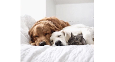 Sleeping with my Pets in bed