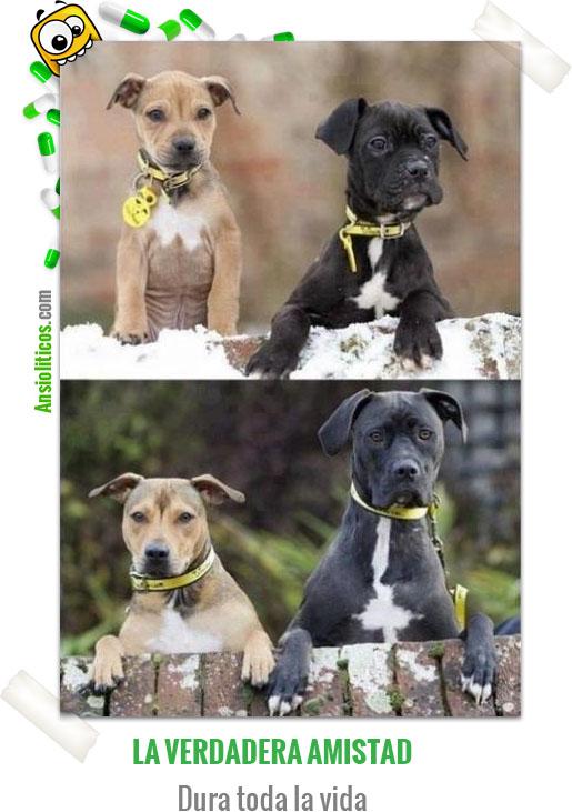 Chiste de Perros: Amistad para toda la Vida