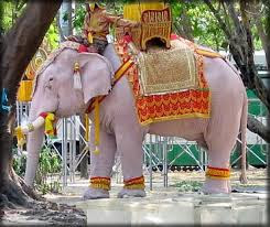 White Elephant Facts in Hindi