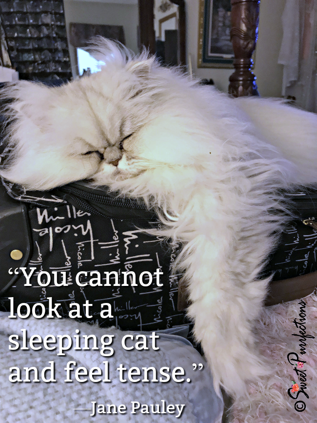 Jane Pauley quote about sleeping cats_Brulee