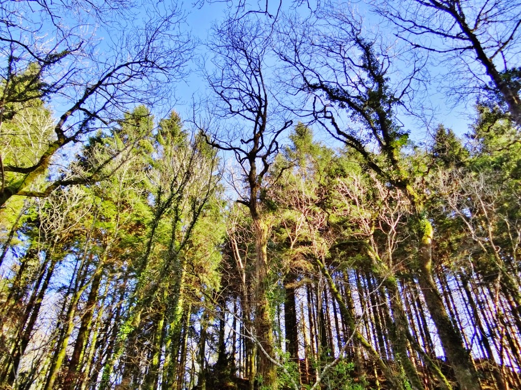 bluestones nature trail trees