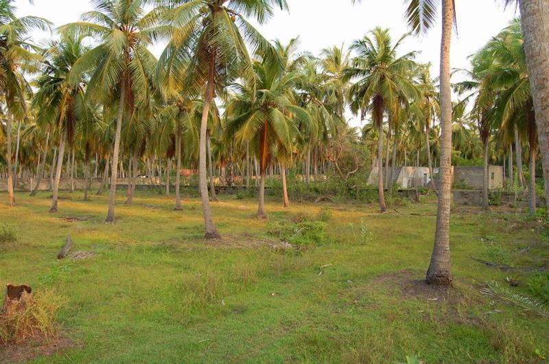 Land Sale In Sri Lanka - ARACHCHIKATTUWA - Puttalam - Apple5s