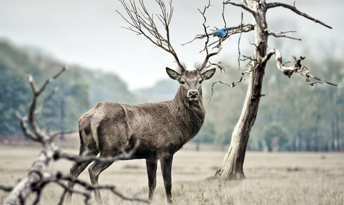 900 Koleksi Gambar Binatang Rusa Kutub HD Terbaik