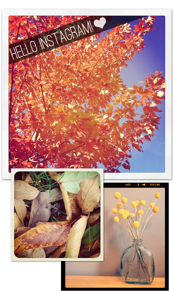 My Instagram Photos