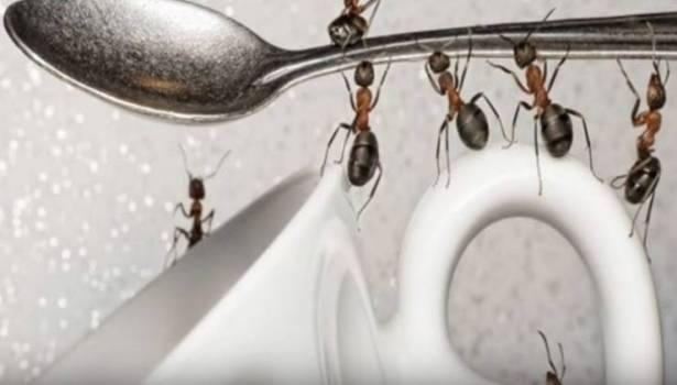 بالفيديو: تخلصوا من النمل نهائيا بطرق طبيعية.. ولن تعود إلى المنزل مرة أخرى!!