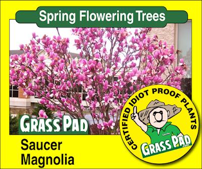 Sauce Magnolia
