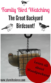 http://www.shareitscience.com/2015/02/see-it-share-it-gbbc-and-woodpeckers.html