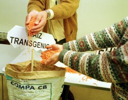 Temer autoriza la importación más grande de maíz transgénico