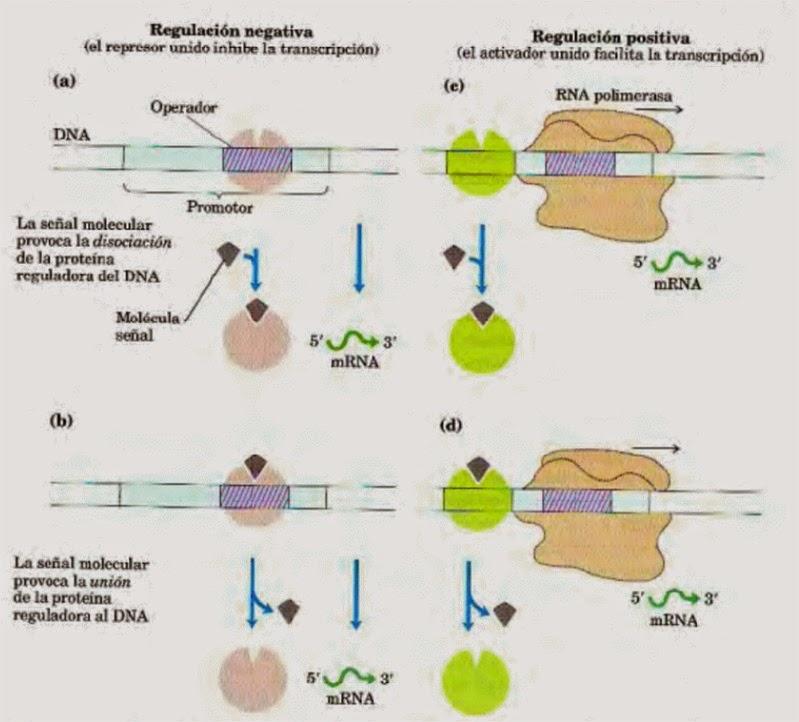 Apuntes de Bioquímica