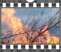 https://4.bp.blogspot.com/-bCv5YIQgu1I/V_ZxQbEaqsI/AAAAAAAAP4E/14gvDnhuHlcNVtMlqp3B2MsTA6qnJiStACLcB/s200/trees%2Bon%2Bfire.jpg