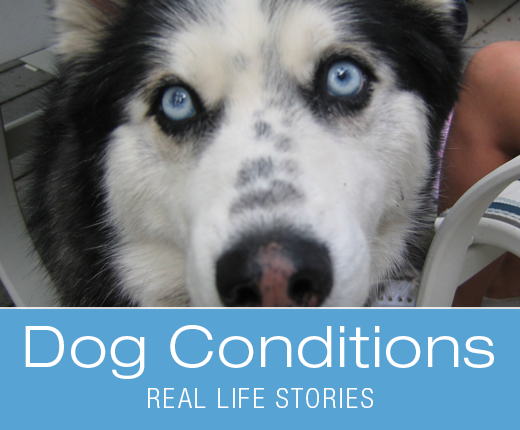Dog Conditions: Canine Seizures - Harley's Story
