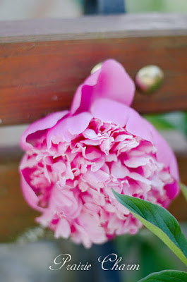 Prairie Charm- Peony Garden-Treasure Hunt Thursday- From My Front Porch To Yours