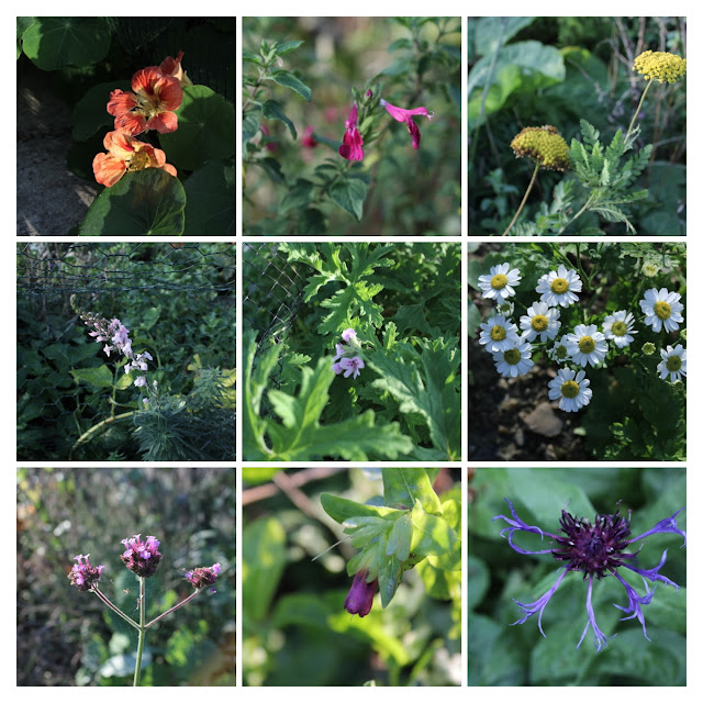 Nine garden flowers blooming in November