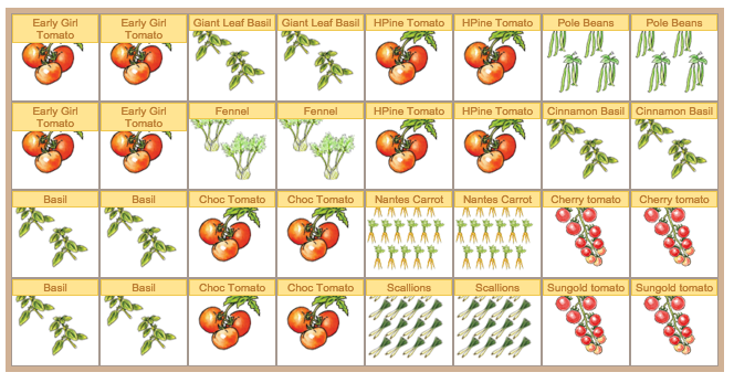 Square Foot Gardening Tomatoes Garden Ftempo