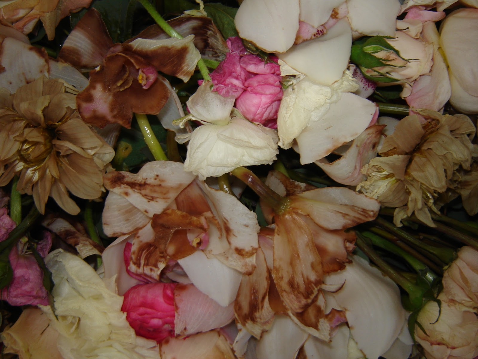 Pressed garden dispelling floral preservation myths her florist is going to help her re create the bouquet and i will preserve that into beautiful heirloom art roses izmirmasajfo