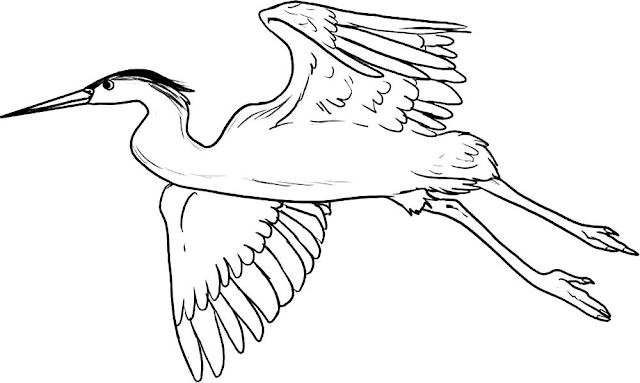 Mewarnai Gambar Burung Bangau - 4
