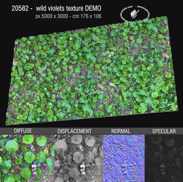 20582 Wild violets seamless texture High resolution + maps