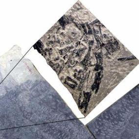 Incredibile scoperta esseri viventi più antichi: scoperti i fossili