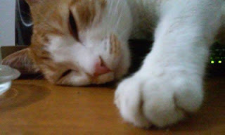 gato-gordo-laranja