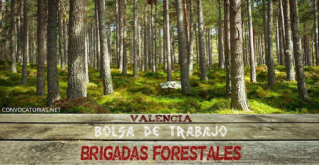 Convocatoria de bolsa de empleo en Valencia para especialistas de brigadas forestales