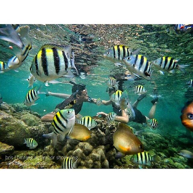Hobi Snorkeling ? Yuk Coba Tempat Tempat Keren Ini Biar Snorkelingmu Terasa Berbeda