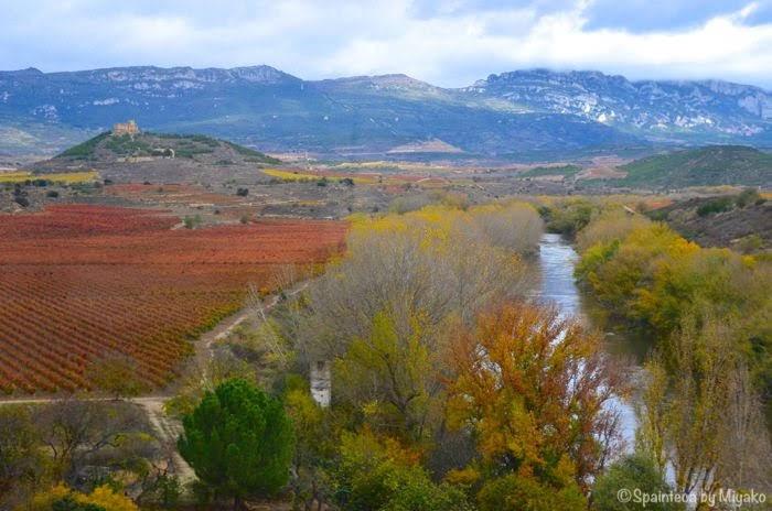 El Tren del Vino de La Rioja, Davadilloワイン列車の車窓から北スペイン・ワインの名産地リオハのぶどう畑とエブロ川