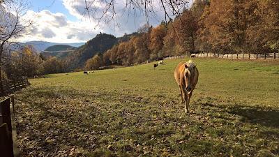 A curious horse in Soprabolzano.