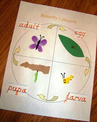 Adventures In Mommy Hood Bugs Butterfly Life Cycle