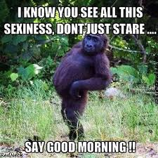 good morning memes- hilarious