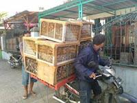 Perlu anda tahu, cara penjualan jangkrik di Indonesia