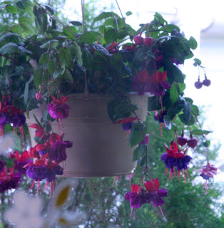 Fuchsia (with bird nest inside) :: All Pretty Things