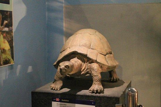 Fosil Museum Purbakala Sangiran