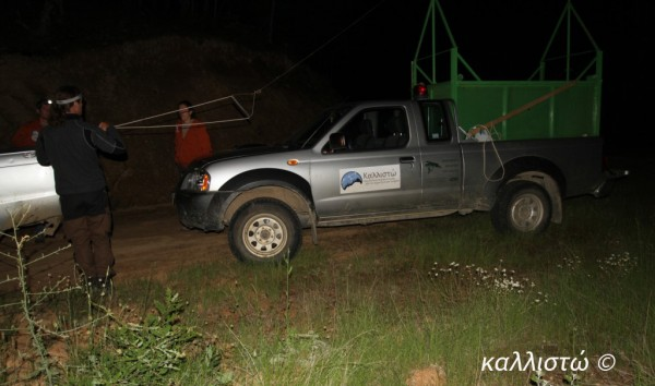 newsit.gr: Συχνή επισκέπτρια της Καστοριάς η αρκούδα Ίρμα