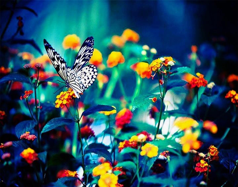 Fotografias De Mariposas Y Flores: Las Fotos Mas Alucinantes: Mariposa Y Flores
