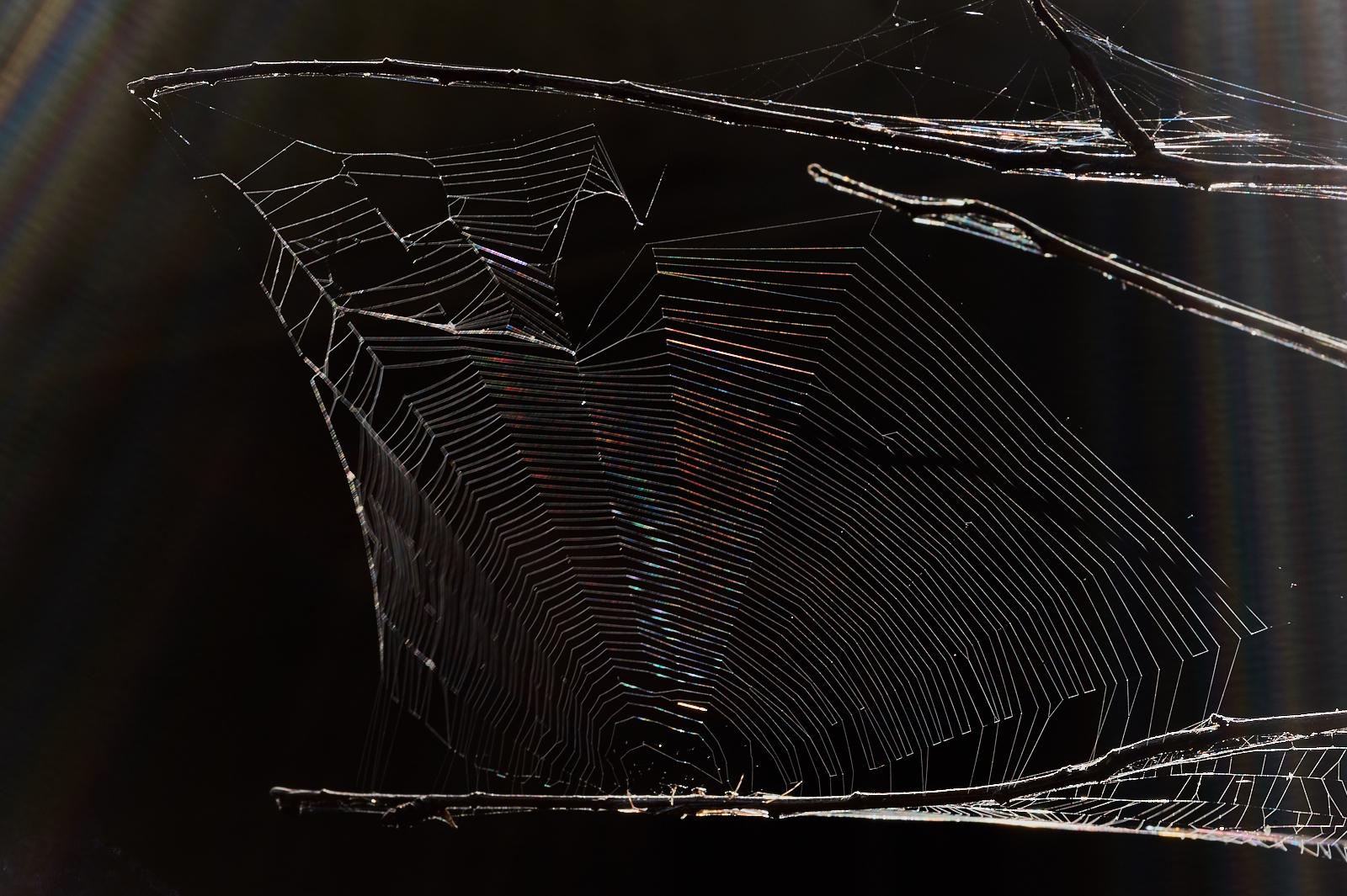 spiders web, rainbow,prism,Philippines