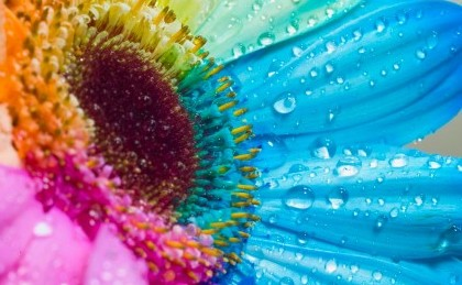 Colorful-Sunflower-Wallpaper