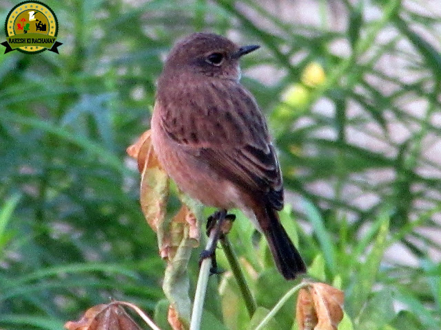 http://rakeshkirachanay.blogspot.com/2017/12/39-photography-bird-39.html