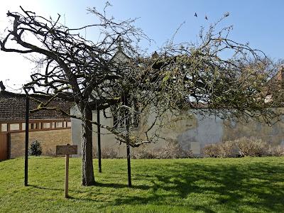 The Holy Glastonbury Thorn