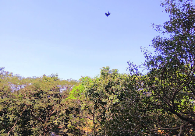 skywatch, blue sky, green trees, mumbai, india, bird, CDP Theme Day,