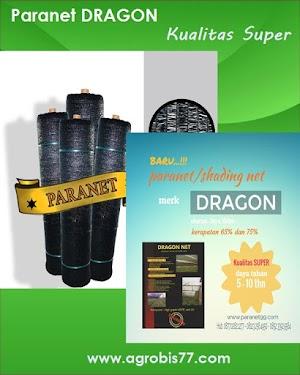 Paranet Cap Dragon