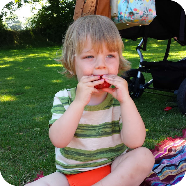 toddler eating strawberries, picnic in the park