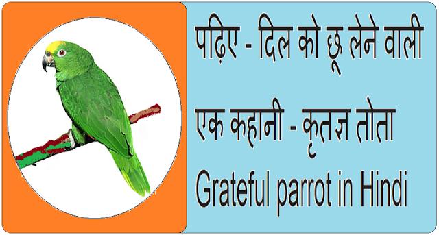 Grateful parrot in Hindi