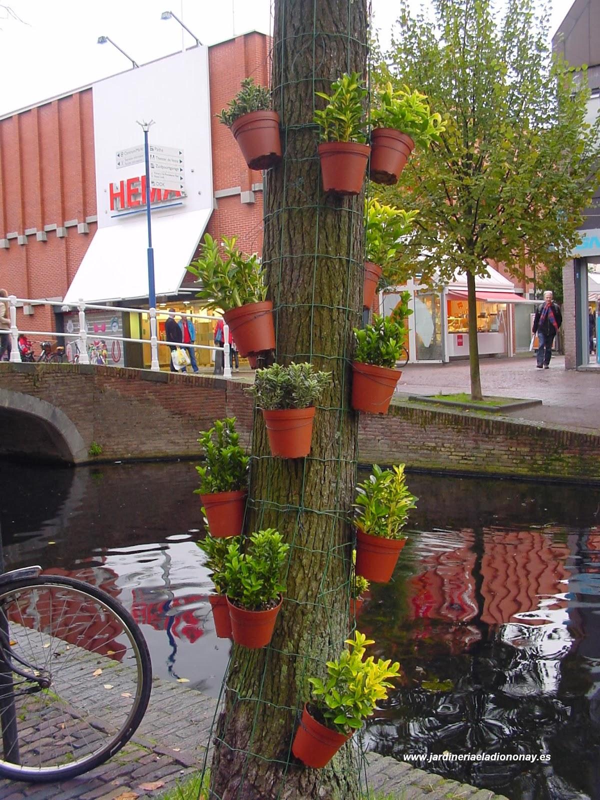el tronco de un rbol le puede servir de apoyo para disponer las macetas que usted desee