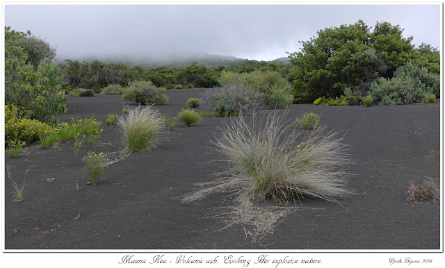 Mauna Kea: Volcanic ash. Evoking Her explosive nature.