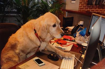 Perro en el lugar de trabajo